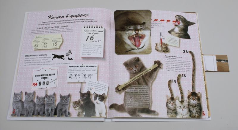 Жан кювелье кошки подарок для всех кто влюблен в кошек 4