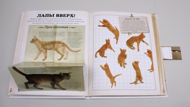 Жан кювелье кошки подарок для всех кто влюблен в кошек 65
